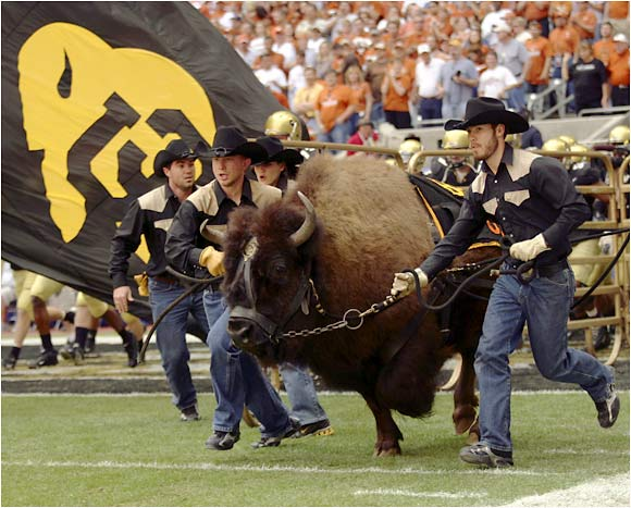 Ralphie and his Colorado handlers stampede out before the Big 12 championship against Texas.