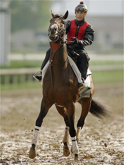 One of two blindingly fast horses -- along with Sinister Minister -- who will be dueling for the early lead. It seems unlikely that this son of noted sprint sire Distorted Humor will survive the Derby's full 11/2 miles, but his gutty performance behind Barbaro in the 1 1/8-mile Florida Derby on April 1 gives any handicapper pause. He shouldn't have been able to run that far, either.