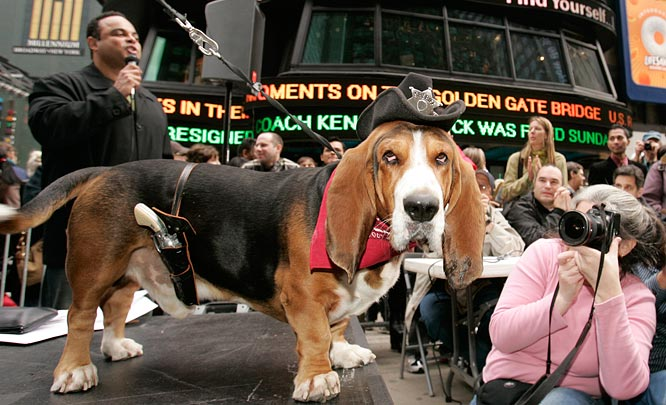 Oliver, a basset hound from New York, dressed as the new sheriff in town, walks the runway as he competes in the Annual Times Square Dog Day Masquerade, a canine costume contest, on Sunday, Oct. 22, 2006, in New York's Times Square. Oliver tied for the title of Top Dog of Times Square 2006.  The event was held to raise awareness for Animal Haven's Adopt-A-Pet program.