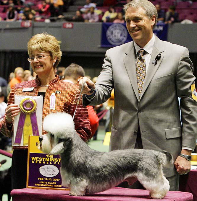 Comedian Bill Cosby's dog Harry, a Dandie Dinmont Terrier, after winning best in breed in the 131st Westminster dog show