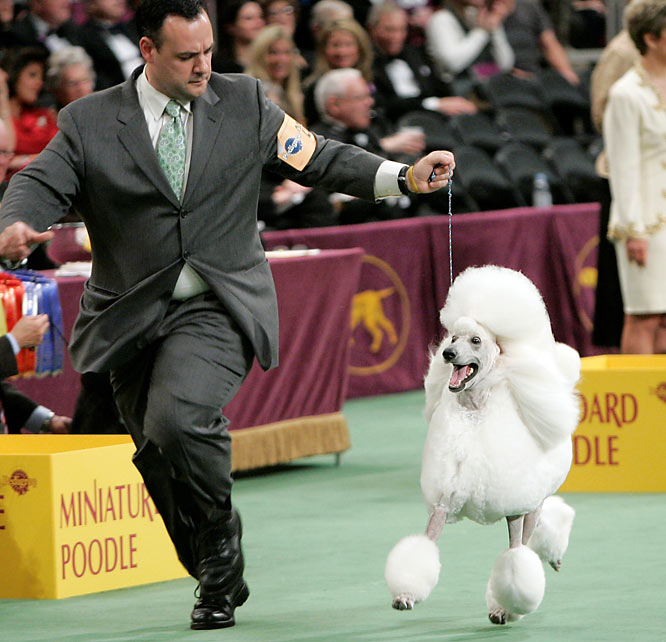 Remy runs around the ring with Christian Manelopoulos during the non-sporting group competition.