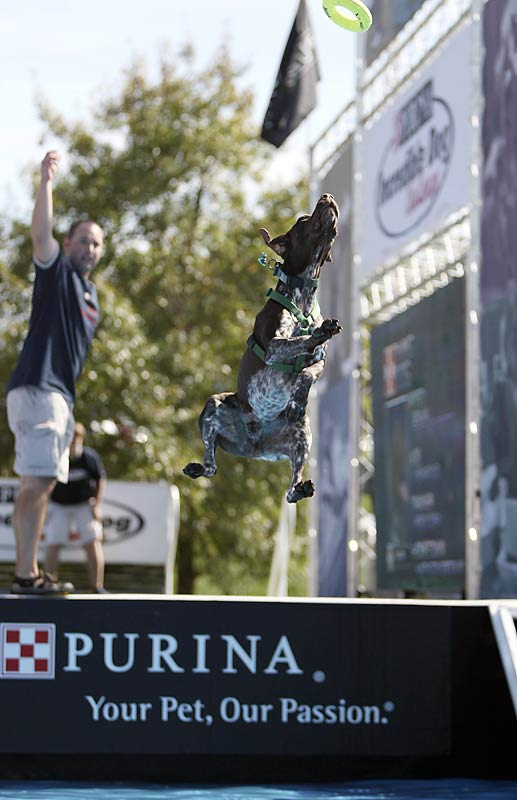Rob DeDora of Huntington Station, N.Y., and his dog Seven in the diving event.