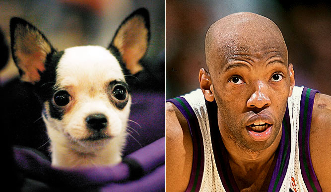 The same eyes, the same expression -- Sam Cassell and this cute chihuahua named Della would be natural walking around together.