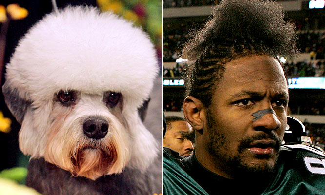 Freddie Mitchell and this Dinmont Terrier would have a special hair connection.