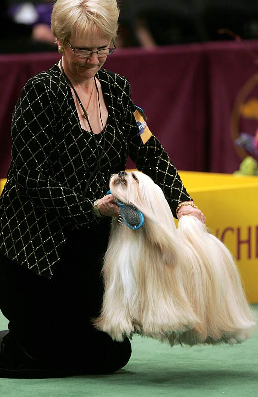 A non-sporting dog, Ch Ta Sen Victory Peyote was named Best in Breed.