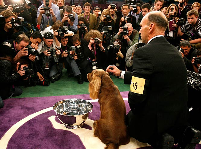 """Said Best In Show judge Sari Tietjen: """"[Stump] showed his heart out. He was everything you want."""""""
