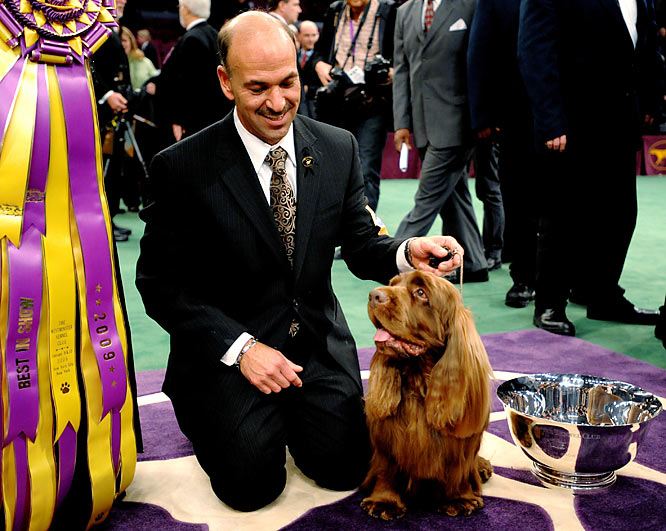 A crowd favorite, Stump edged a elite class in the Best In Show competition at the 133rd Westminster.