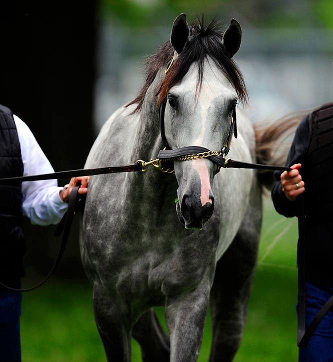 Post Position: 15<br>Jockey: Edgar Prado<br>Trainer: Todd Pletcher<br><br>Dunkirk is trying to become the first horse since Apollo in 1882 to win the Derby without making a start at the age of two. The gray colt has won two of his three starts this year, losing only to Quality Road in a thrilling stretch drive at the Florida Derby. But Quality Road will miss the Derby with an injury, leaving the door open for Dunkirk to be a serious challenger.