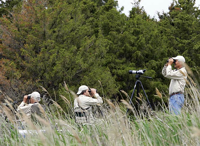 For those who decry the violence of boxing while embracing the birdies, there is the annual World Series of Birding in Cape May, NJ, where intrepid contestants muck about the wild to see who can spot the widest variety of winged feathered species in a 24-hour period.