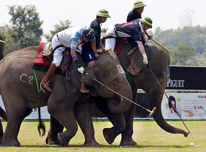 Pack your trunk and head for Nepal as The World Elephant Polo Association will be celebrating its silver jubilee in November. It's a truly international sport with an annual world championship. Teams of three-four pachyderms (plus drivers and players) compete for more than peanuts in two 10-minute chukkas on a pitch that's about the size of a soccer field.