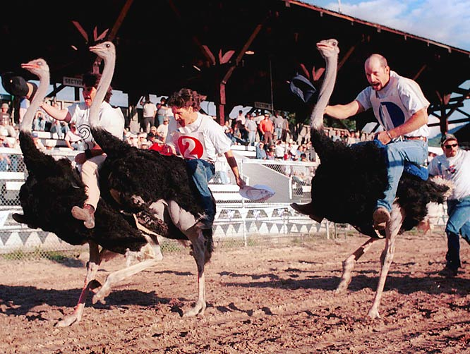 If NASCAR is unsatisfied with the Car of Tomorrow, it might consider switching to ostriches, which can reach speeds of up to 45 miles per hour while running on a cheaper fuel mix of bugs and plants. The feisty big birds are speedy staples of competitions the world over, and you can watch them go each year at the Ostrich Festival in Chandler, AZ.