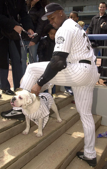 "Frank Thomas pets his dogs Bubba and Barbie during the ""Dog Day"" promotion at Comiskey Park."