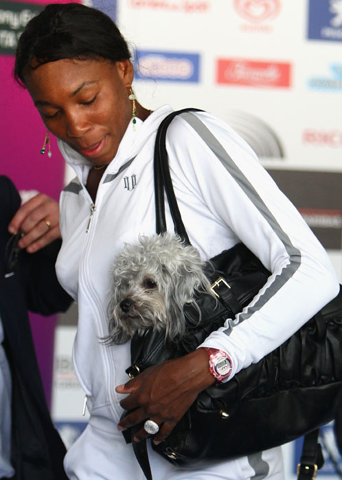 Venus Williams and her dog leave the press conference during previews for a WTA event in Rome.