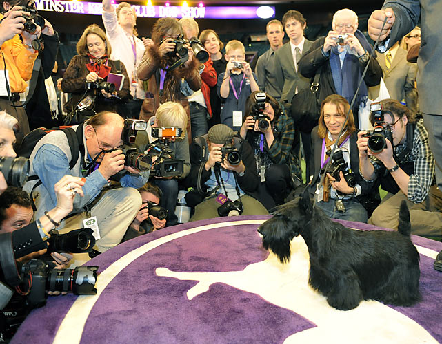 Scottish Terrier Sadie poses for the press after winning Best in Show at  the 134th Westminster Kennel Club Dog Show at Madison Square Garden