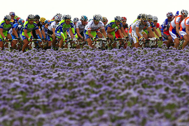 The Tour de France pack rides past lilac flowers on July 5 in the 201 km and second stage of the race run between Brussels and Spa.