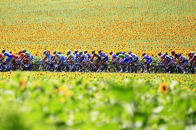 The pack ride past sunflowers during the 184.5 km and 14th stage of the Tour de France between Revel and Ax-Trois-Domaines on July 18.