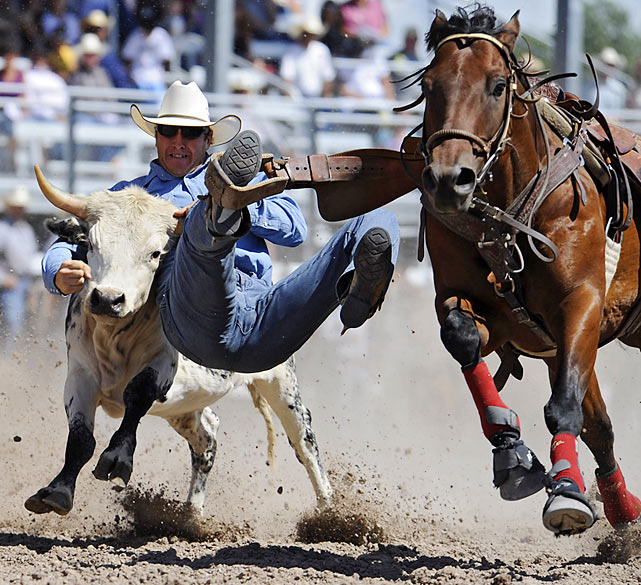 Tait Kvistad of Crawford, Neb., participates in the steel-wrestling portion of the rodeo, in which he drops from the horse to the steer and attempts to wrestle the steer to the ground by twisting its horns.
