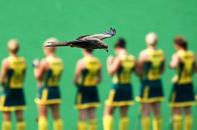 A bird steals the show as the Australian women's field hockey teams lines up to play Scotland at Major Dhyan Chand National Stadium during day six of the 2010 Commonwealth Games in Delhi, India.