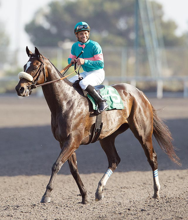 Bought at an auction for only $60,000 when she was one year old, Zenyatta's exceptional racing career -- in which she hasn't lost a single race -- did not begin until she was three.  On Nov. 22, 2007, Zenyatta hit the track for the first time at Hollywood Park.  She won the race by three lengths.