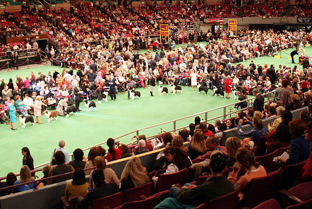 Madison Square Garden during Best of Breed Competition at the 135th Westminster Dog Show.