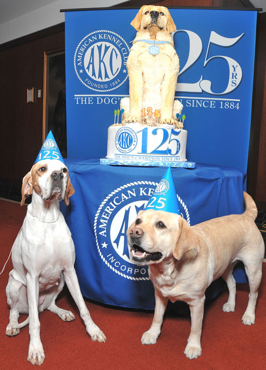 They're not directly related to sports, but these two Labrador Retrievers were so ridiculously adorable that we had to include them. This furry pair celebrated the American Kennel Club's 125th anniversary.