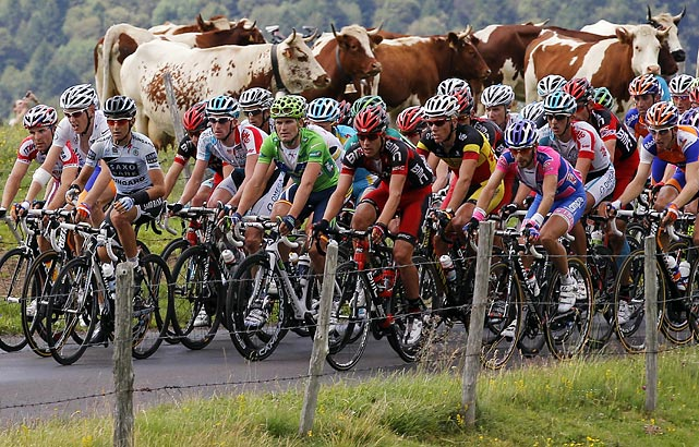 Livestock looks on as the pack climbs La Croiz Saint Robert Pass in the eighth stage of the 2011 Tour de France. Portuguese cyclist Rui Alberto Costa won his first career Tour stage in 4 hours, 36 minutes, 46 seconds.