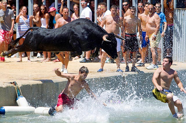 """The """"Bulls to the sea"""" festival in Denia, Spain, lived up to its name as the aggressive animal leaped into the Mediterranean Sea along with celebrants of the festival. The popular celebration in the small town on the Eastern part of the country ends with the Bulls being brought back to land on boats."""