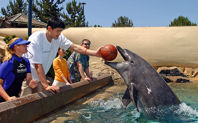 Yao Ming plays with a bottle-nosed dolphin at SeaWorld in San Diego.