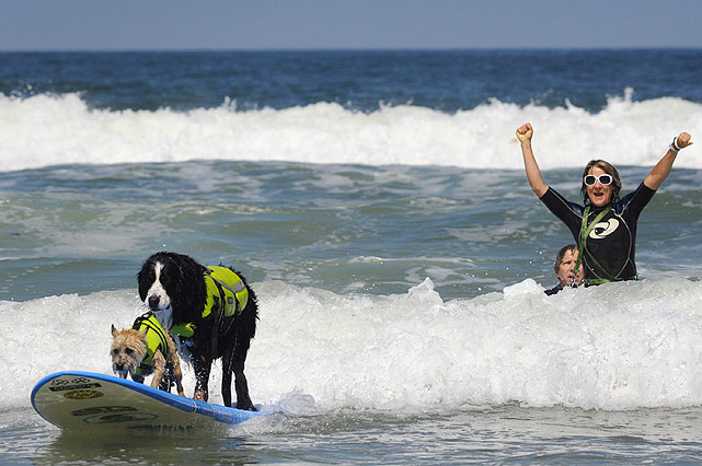 Two dogs ride together on a surfboard while their owner cheers them on during the 6th Annual Loews Coronado Bay Resort Surf Dog Competition, which took place on Imperial Beach, Calif.