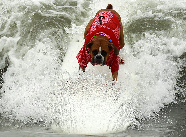 This boxer, named Hanzo Felland, cuts cleanly through the wave, with a symmetrical wave adding to the run.