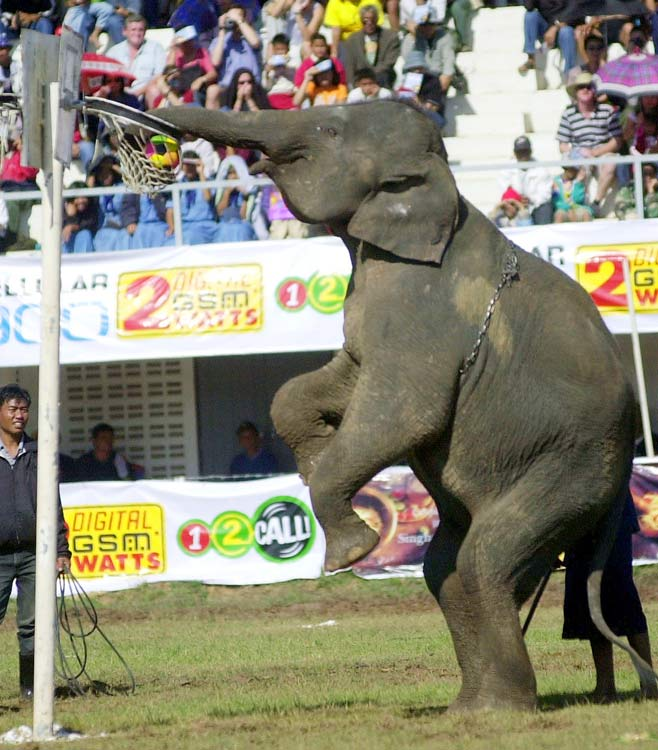 "One elephant decided to be a showoff at the Surin Elephant Roundup, where ""pachyderms display their dexterity and intelligence."" More than 250 elephants were on show at the event in Thailand. We're just sad we weren't able to witness it."