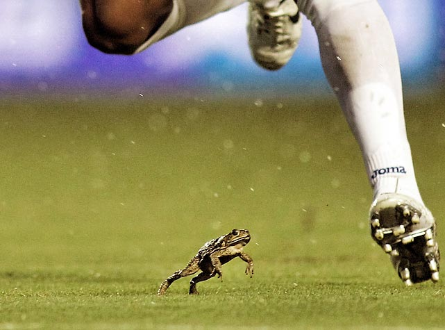 A frog stole the show at a Honduras-USA soccer game in Miami Gardens, Fla.