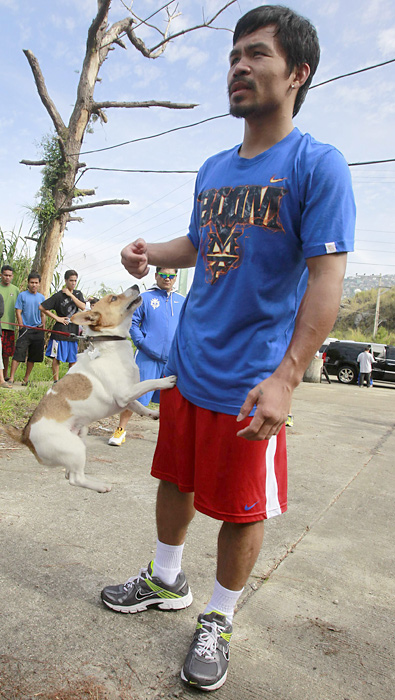 """Manny Pacquiao's pet dog """"PacMan"""" jumps on him as he rests from his morning training in the northern Philippine resort city of Baguio."""
