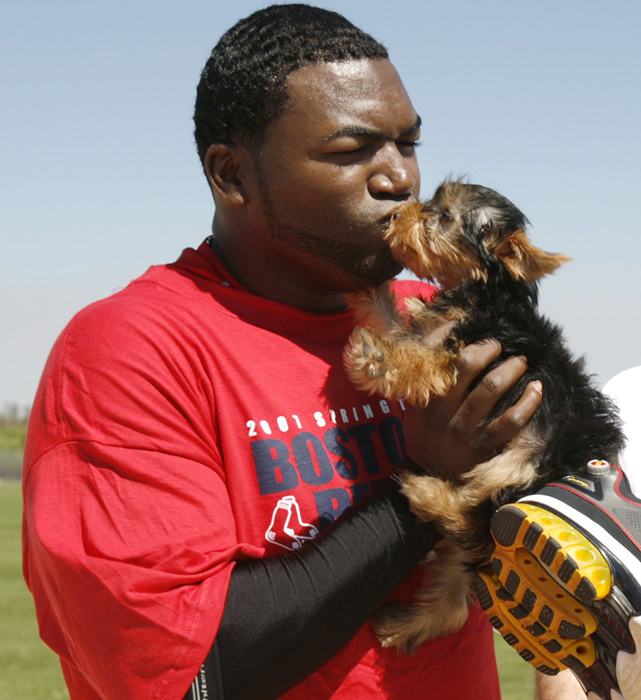In this photo, David Ortiz kisses his dog Mikey following conditioning drills at the team's spring training facility in Fort Myers, Fla.