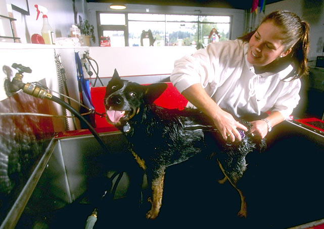 Downhill skier Picabo Street  washes her dog Dougan at at Aquadog in Portland, Ore.