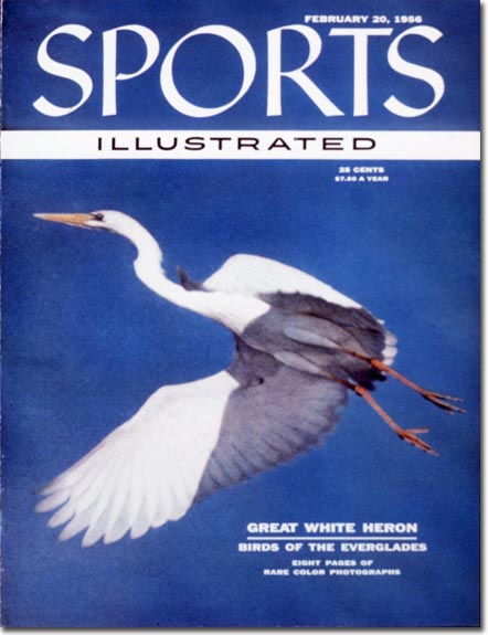 SI traveled down to the Everglades to shoot the great white heron and eight pages of birds in Florida.