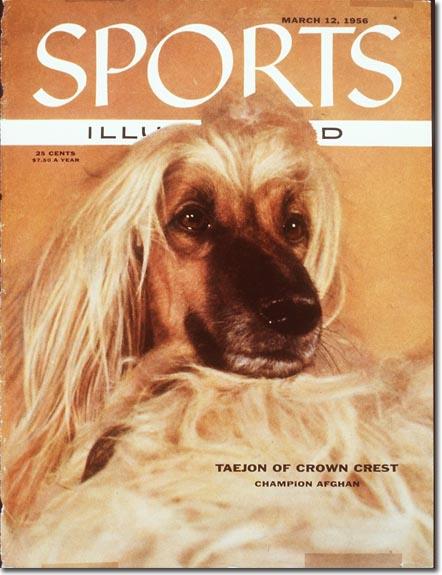 No, it's not a dog in a wig, it's a champion afghan.