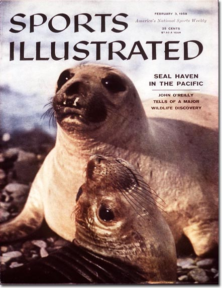 Spotlight on a seal haven in the Pacific. One of their ancestors eventually made it to Orange County to take Buster's hand.