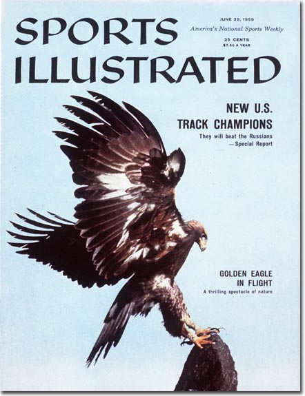 The golden eagle in flight: A thrilling spectacle of nature