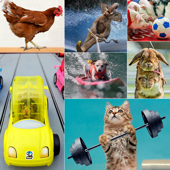 Can you identify the actual critter sports? Here's a hint: Four of them are real. You'll find the answers on the last slide!