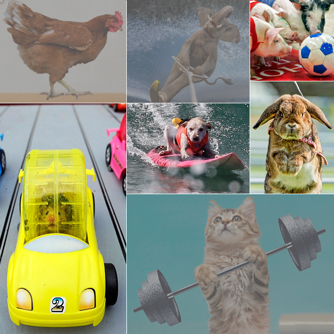 Elephant Water Skiing: Fake                   <p>                   Hamster Racing: Real                   <p>                   Bunny Jumping: Real                   <p>                   Dog Surfing: Real                   <p>                   Chicken Gynamstics: Fake                   <p>                   Cat Weightlifting: Fake                   <p>                   Pig Olympics: Real                   <p>                   Photos: JOHN LUND/BLEND IMAGES RM/GETTY IMAGES (ELEPHANT), News & Pictures North (hamsters), JENS MEYER/AP (RABBIT), LUCY NICHOLSON/REUTERS (DOG), ERICK W. RASCO FOR SPORTS ILLUSTRATED (CHICKEN); TABITHA PATRICK/GETTY IMAGES (MAT), AKIMASA HARADA/FLICKR RF/GETTY IMAGES (CAT); HAAG & KROPP GBR/GETTY IMAGES (BARBELL), IVAN SEKRETAREV/AP (PIGS)