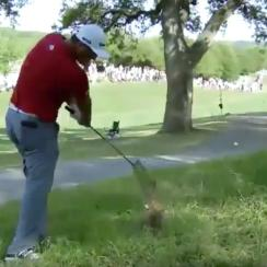 Jon Rahm wasn't intimidated by these trees.