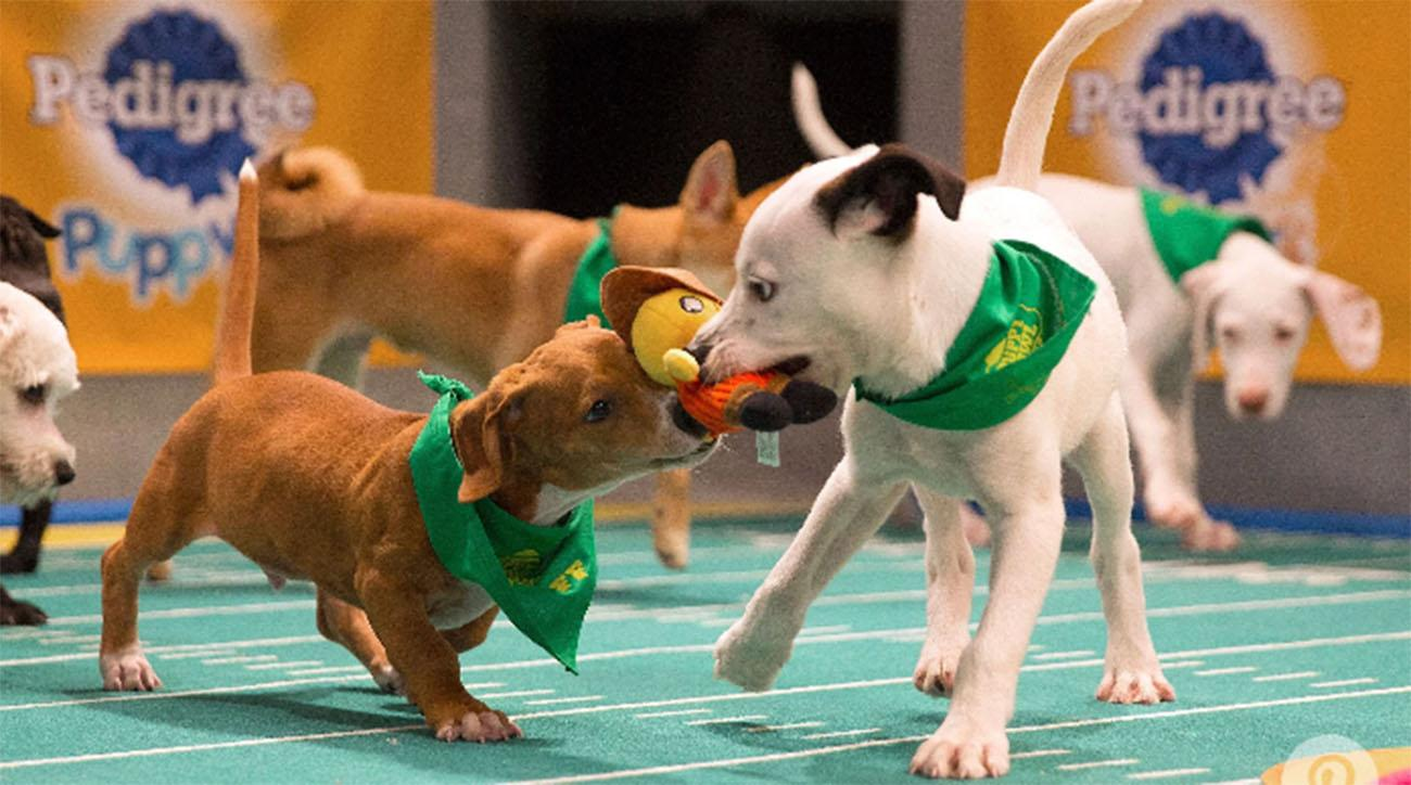Where are the Puppy Bowl puppies now?
