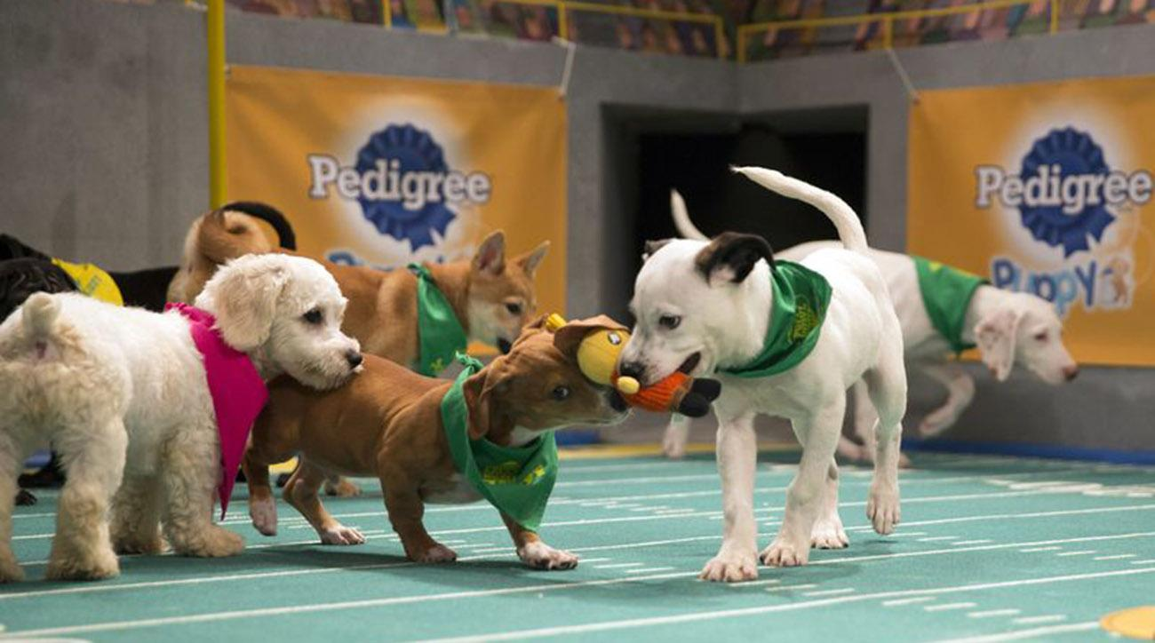 Puppy Bowl players are ready for their big game