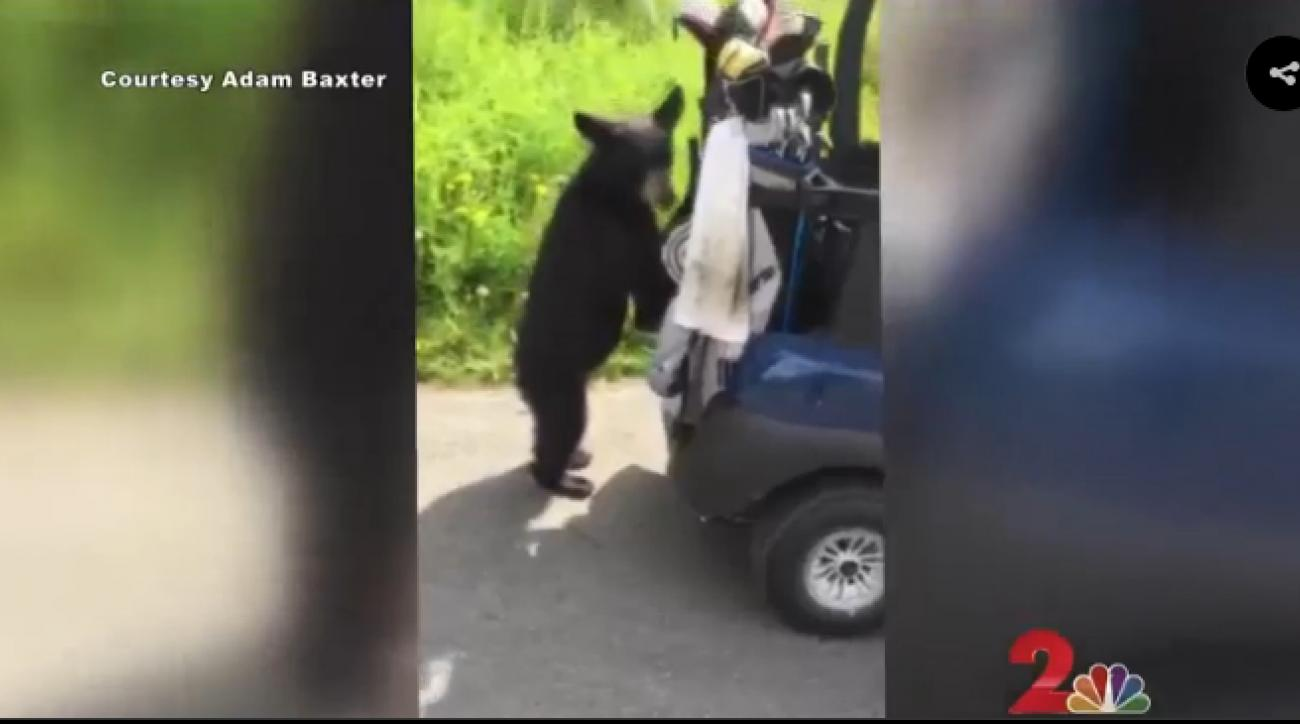 A bear cub on a golf course in Alaska sampled some beer left behind in a golf cart.