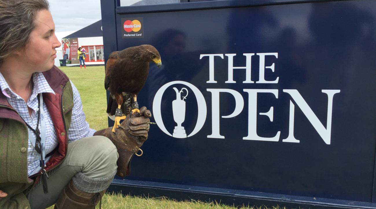 This little guy's job is to keep the seagulls away from Royal Troon.