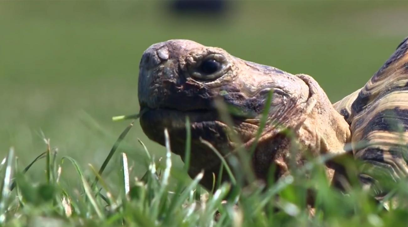 SI's Mustard Minute: World's naughtiest boy Bertie the Turtle IMG