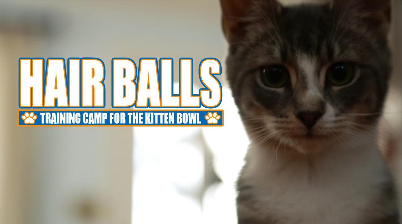 Mustard Minute: Hair Balls: Training Camp for the Kitten Bowl IMG