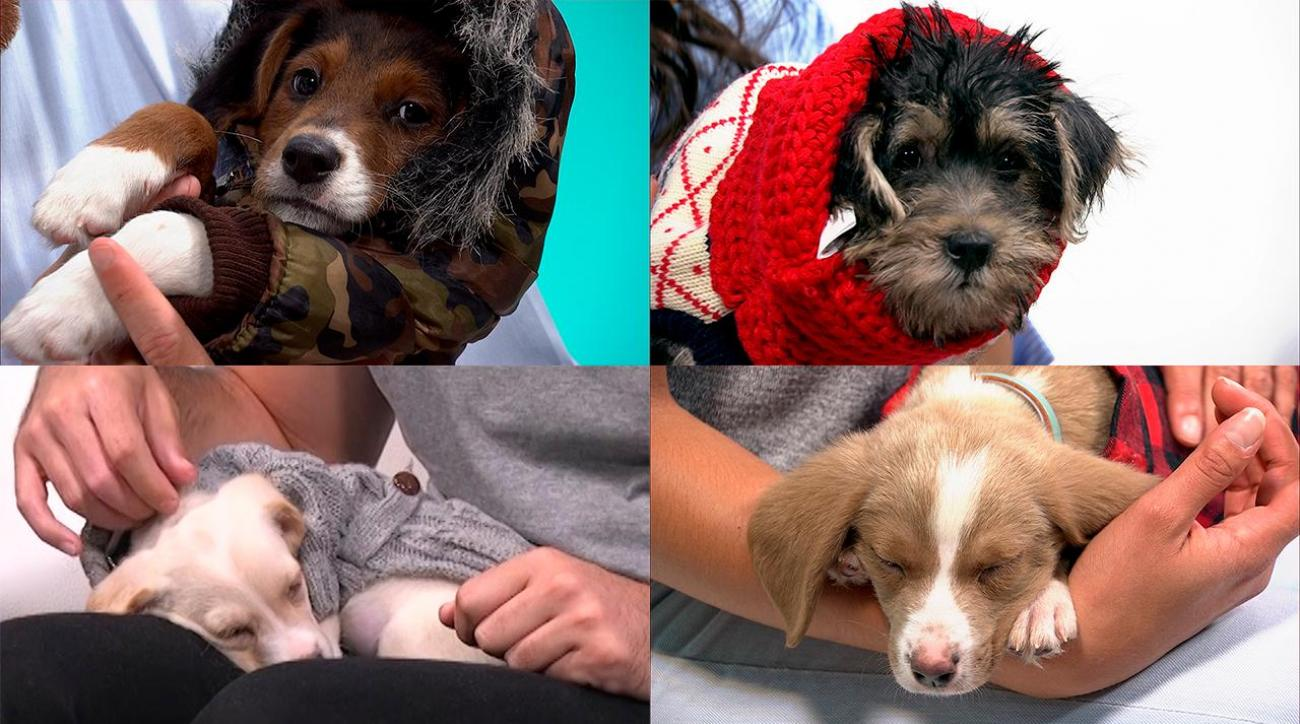 Sports Style Swipe: Puppies in adorable outfits IMG