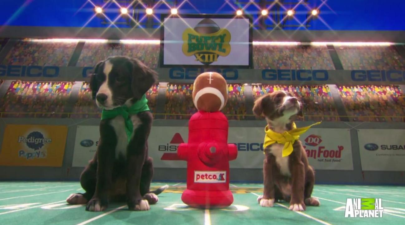 Puppy Bowl XIII kicks off